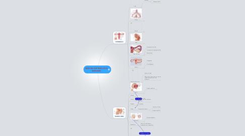 Mind Map: SISTEMA REPRODUTOR HUMANO