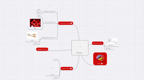 Mind Map: Tissues