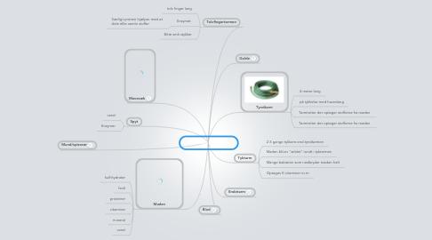Mind Map: Fordøjelses system