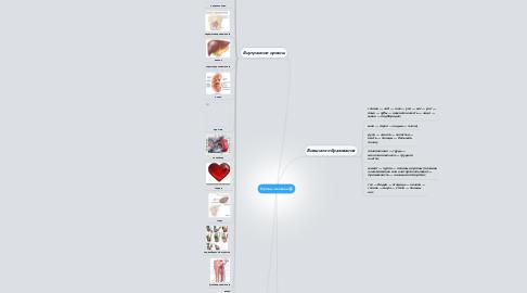 Mind Map: Органы человека