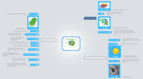 Mind Map: Estructura Celular