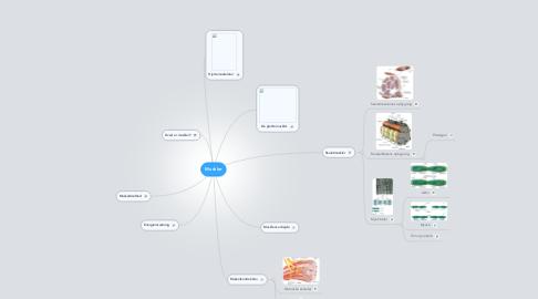 Mind Map: Muskler
