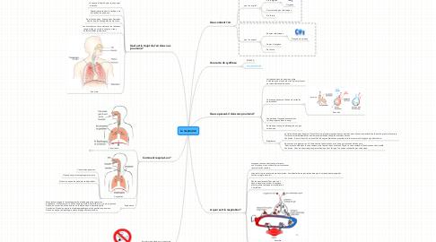 Mind Map: La respiration