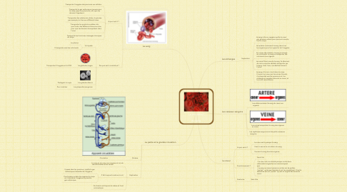 Mind Map: La circulation  du sang
