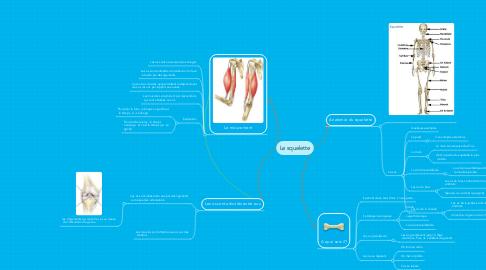 Mind Map: Le squelette