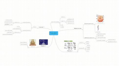 Mind Map: Высшая нервнаяделятельность