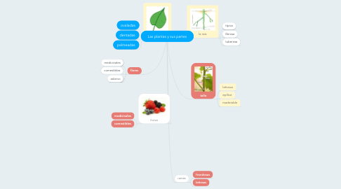 Mind Map: Las plantas y sus partes