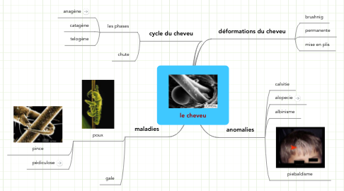Mind Map: le cheveu