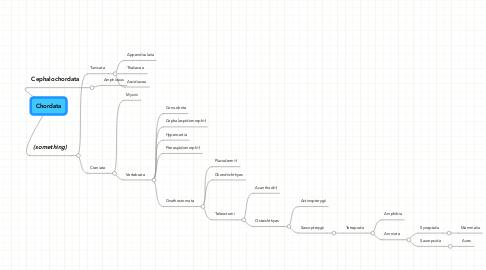Mind Map: Chordata