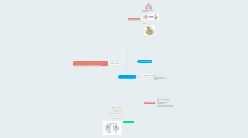 Mind Map: Copy of The Body Systems