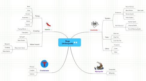 Mind Map: Bugs (Arthropods)
