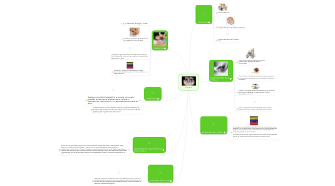 Mind Map: TUTELA