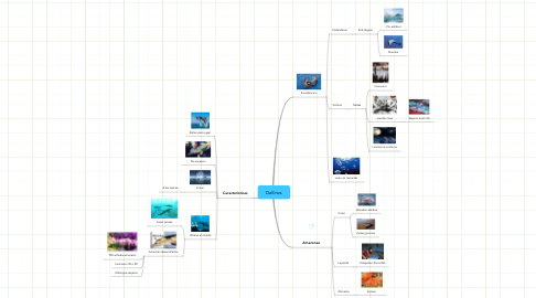 Mind Map: Delfines