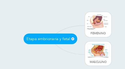 Mind Map: Etapa embrionaria y fetal