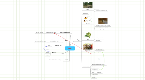 Mind Map: SNAILS