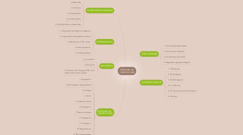 Mind Map: REFORZAR LAS CORRECCIONES
