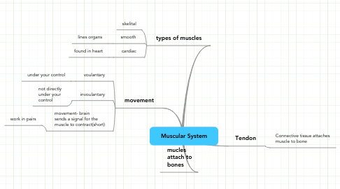 Mind Map: Muscular System