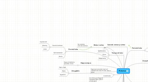 Mind Map: Thalamus