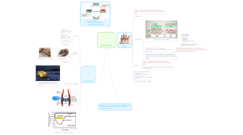 Mind Map: Bone & Jonits