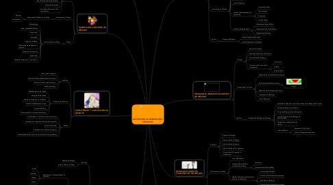 Mind Map: GESTIÓN DE LOS RIESGOS DEL PROYECTO