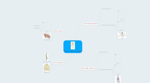 Mind Map: Кости скелета человека
