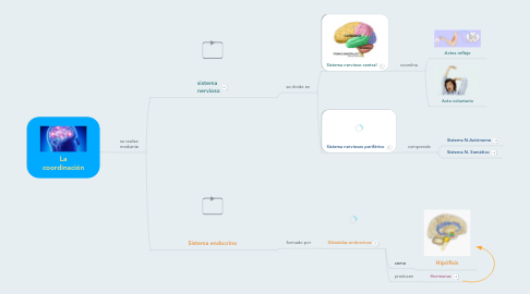 Mind Map: La coordinación
