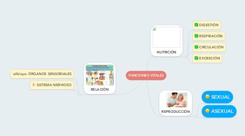 Mind Map: FUNCIONES VITALES