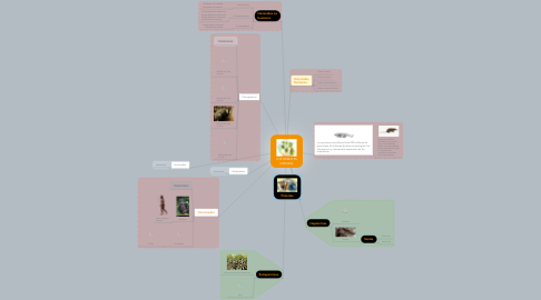 Mind Map: LOS PRIMATES (ORIGEN)