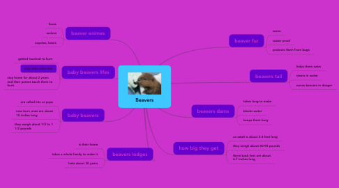 Mind Map: Beavers