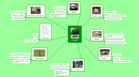 Mind Map: Turtles