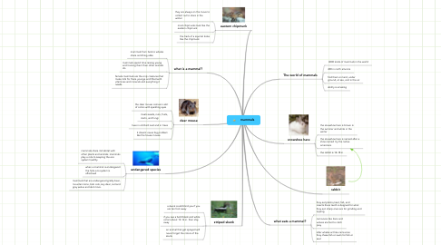 Mind Map: mammals