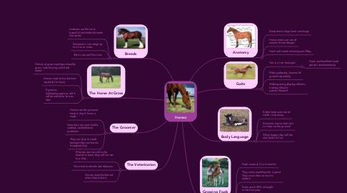 Mind Map: Horses