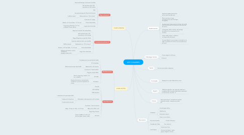 Mind Map: ILES CANARIES