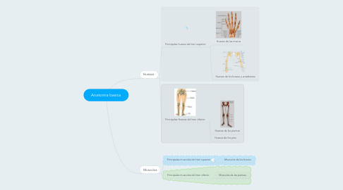 Mind Map: Anatomia basica