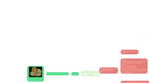 Mind Map: Reconstitution de l'histoire de la vie sur Terre