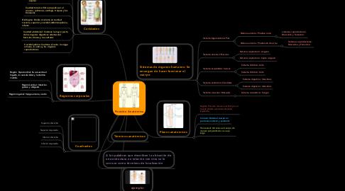 Mind Map: Posición Anatómica