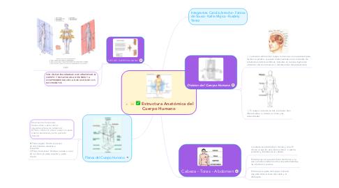 Mind Map: Estructura Anatómica del Cuerpo Humano