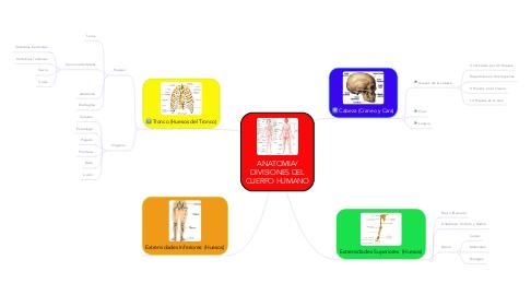 Mind Map: ANATOMIA/ DIVISIONES DEL CUERPO HUMANO