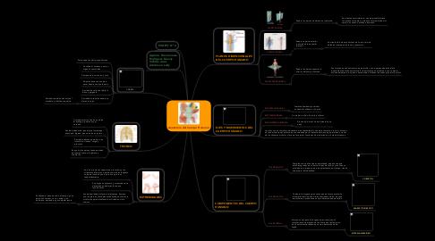 Mind Map: Anatomía del Cuerpo Humano