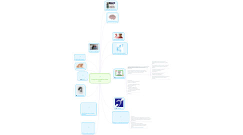 Mind Map: Categories of Disability Under IDEA