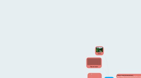 Mind Map: ТАЙГА (хвойный лес)