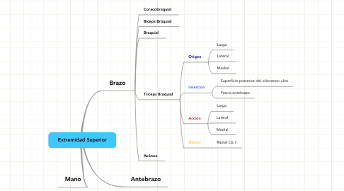 Mind Map: Extremidad Superior