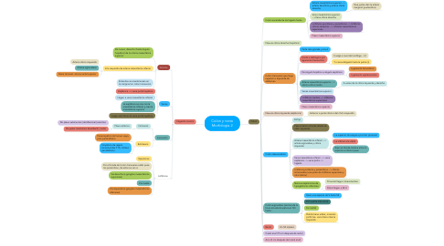 Mind Map: Colon y recto Morfología 2