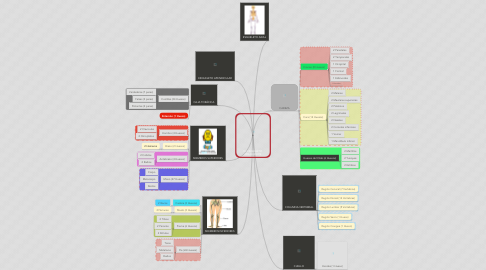 Mind Map: EL ESQUELETO (206 HUESOS)