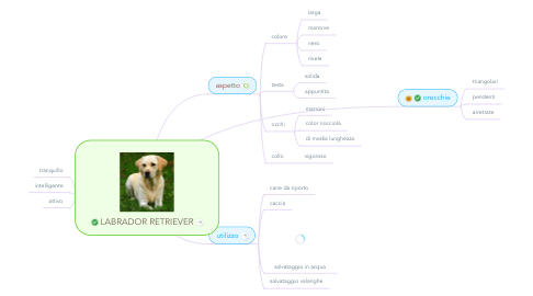 Mind Map: LABRADOR RETRIEVER