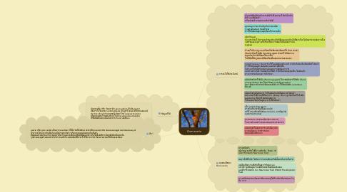 Mind Map: Gum acacia