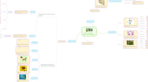 Mind Map: Relaciones entre  Seres vivos y el Medio