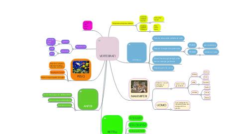Mind Map: VERTEBRATI