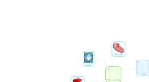 Mind Map: Célula vegetal