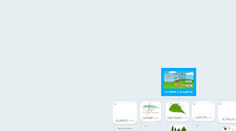 Mind Map: La planta y sus partes